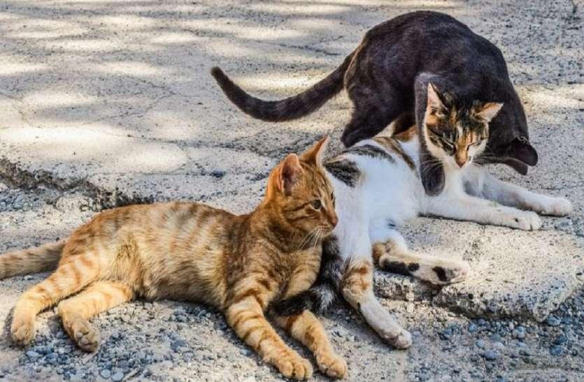 मुंबई में जल्द शुरू होगी बिल्लियों की नसबंदी