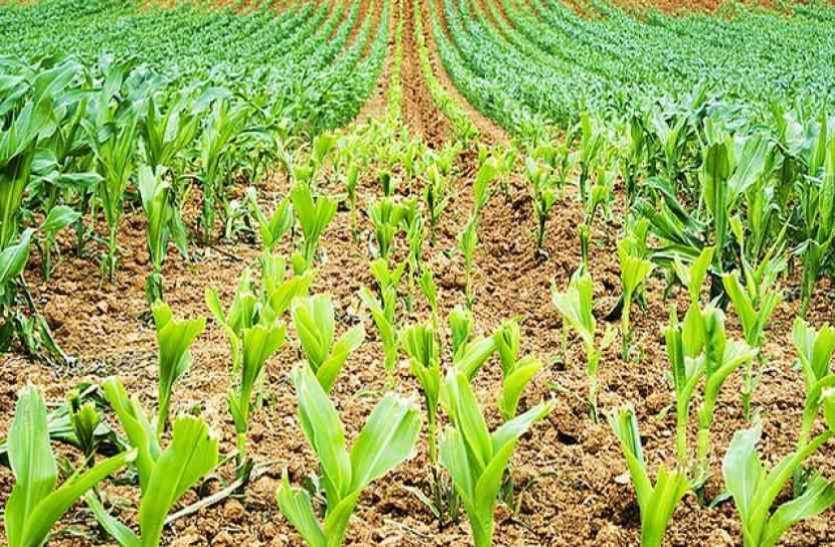 खेती करने का शौक रखते हैं तो एग्री सेक्टर में बना सकते हैं कॅरियर