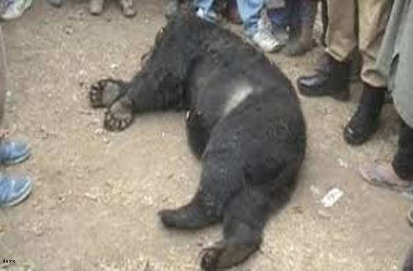 नेशनल हाईवे में तेज रफ्तार वाहन की चपेट में आने से हुई भालू की मौत
