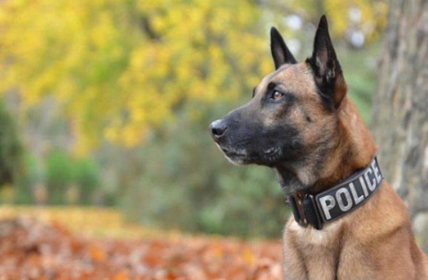 इन खूंखार कुत्तों की मदद से मारा गया था लादेन, अमेरिकी राष्ट्रपति के घर की भी करते हैं सुरक्षा