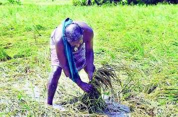 पश्चिम ओडिशा के किसान हुए लामबंद, इस बार इतनी बड़ी संख्या में दबाएंगे नोटा का बटन