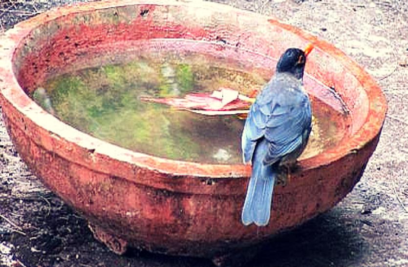 इंसान और पक्षियों की प्यास बुझाने कर रहे प्रयास