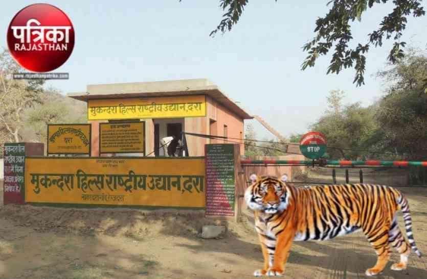 Tiger Reserve : आज मुकुंदरा पहुंचेगी एनटीसीए की टीम, टाइगर रिजर्व में बाघ-बाघिनों की सुरक्षा का लेगी जायजा