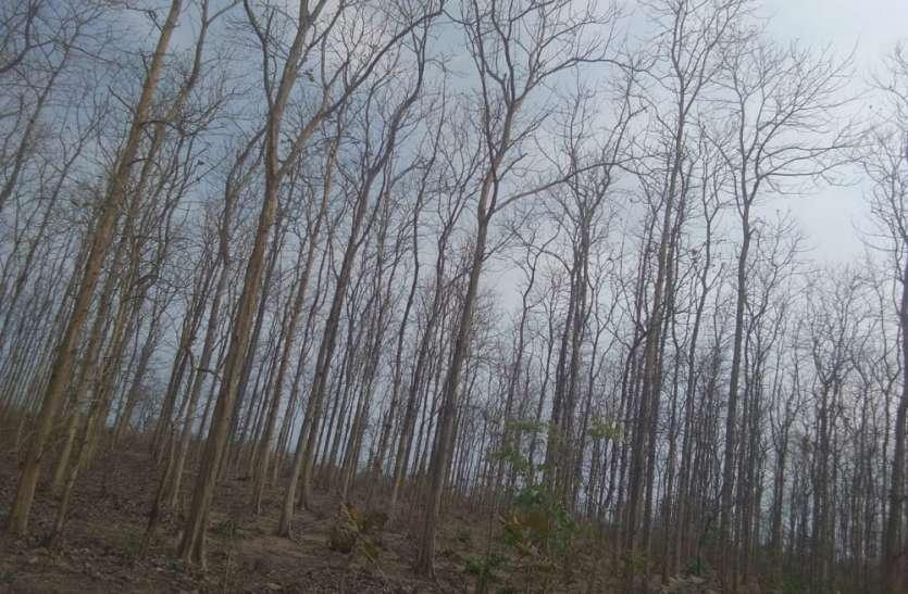 मिश्रित वन लगाने की मांग सीएम को सौंपा ज्ञापन