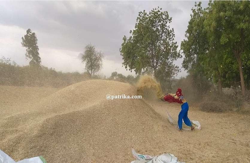 VIDEO : फसलों में करीब चालीस प्रतिशत का नुकसान, एक ही दिन में तापमान भी 11 डिग्री तक गिरा