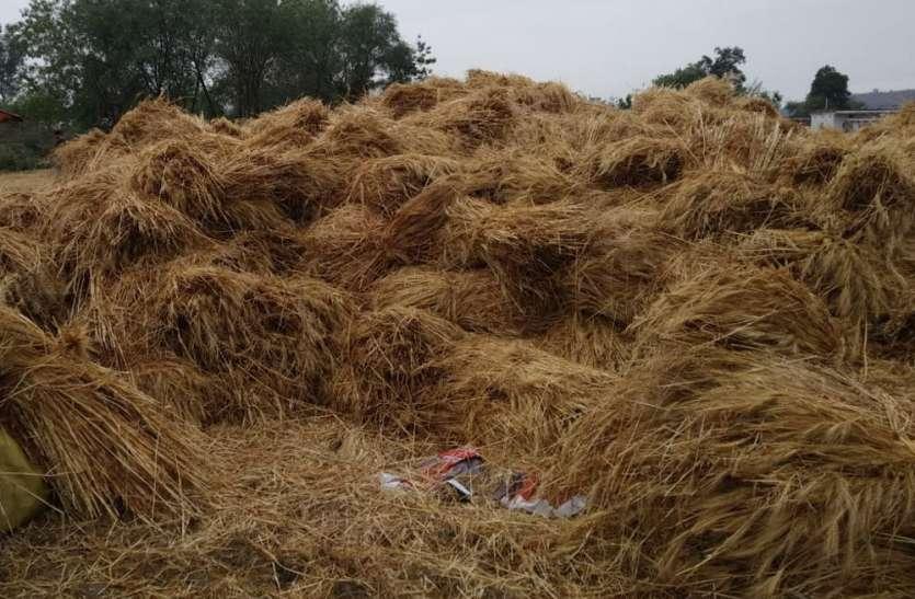रात में झमाझम बारिश ने किसानों को किया मायूस, खलिहानों में रखी हजारों क्विंटल फसल भीगी