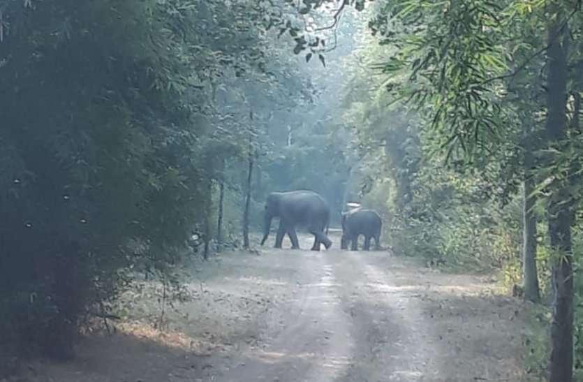 आबादी के समीप पहुंचा 28 हाथियों का झुंड, इन गांवों में मचाया कहर, देखें वीडियो