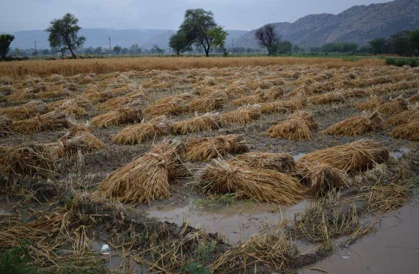 आफत की बरसात व ओले, खेतों में डूब गई किसान की मेहनत, आप भी जानिए फसलों का क्या हुआ हाल