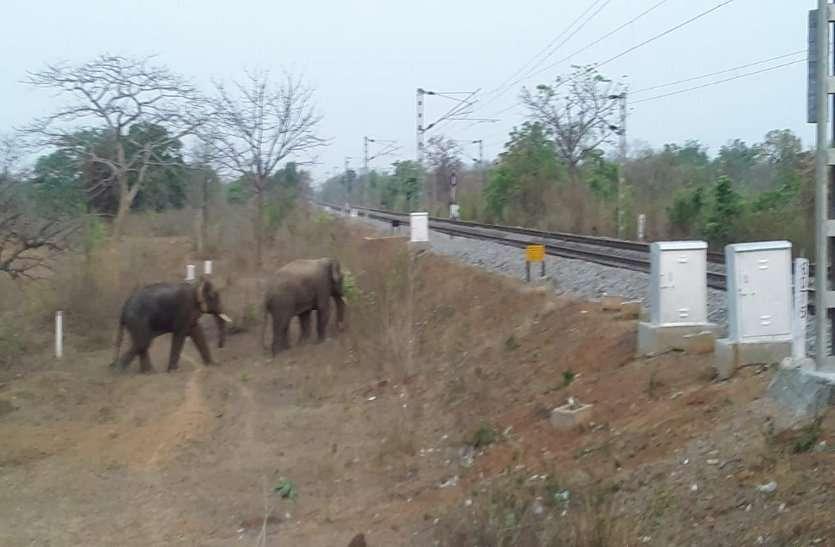 Video: पोलिंग बूथ में हाथियों का डर, कभी भी आकर मचा सकते है उत्पात