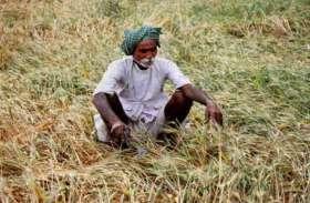 राजस्थान सरकार का बड़ा फैसला: अब सिर्फ इन किसानों को ही मिलेगा सहकारी बैंकों से ऋण, इनका कटा पत्ता