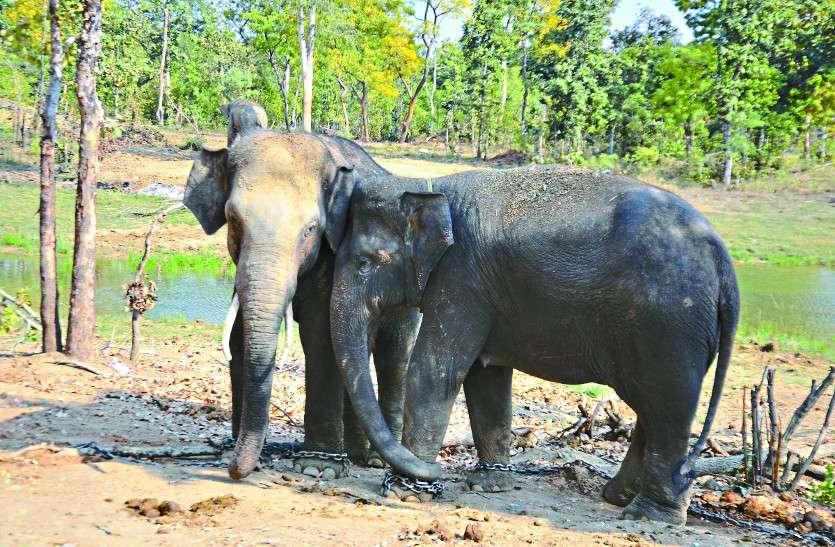 गांव के नजदीक पहुंचे दो जंगली हाथी, वन विभाग ने ग्रामीणों को दी चेतावनी