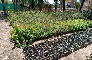 कटहल के पौधों से महकेगा नागदा-खाचरौद, वनरोपणी में तैयार हो रहे १० हजार पौधे