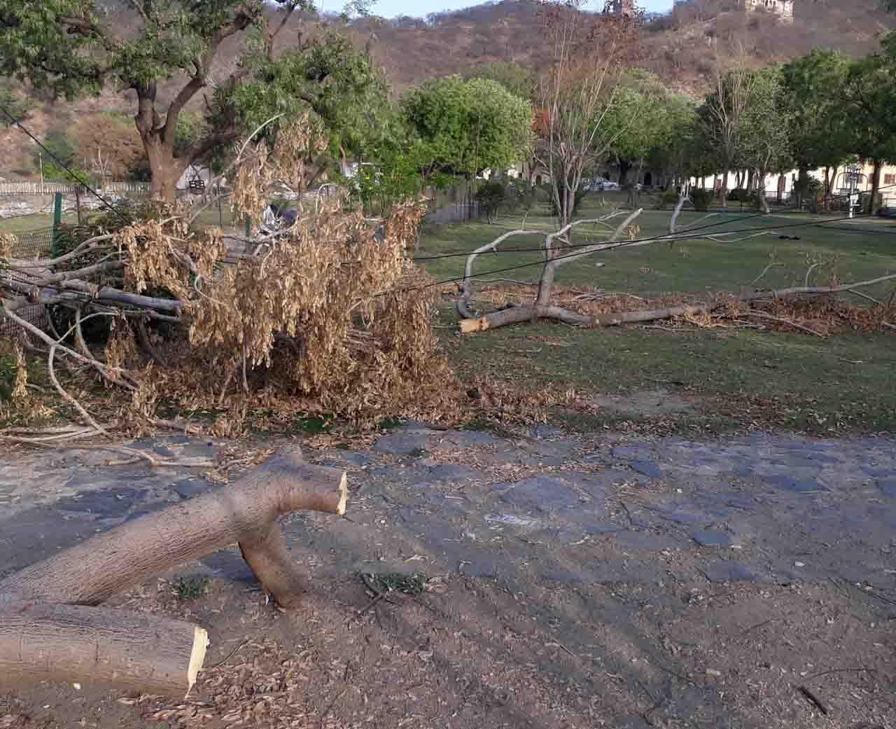 टूटी तारबंदी, उजड़ रहा नौचोकी का उद्यान :पुरातत्व केयर टेकर नहीं गंभीर, चर रहे मवेशी