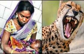 चीते ने 18 महीने के मासूम को जबड़े में दबाया, मां ने ऐसे बचा लिया अपने लाल को...