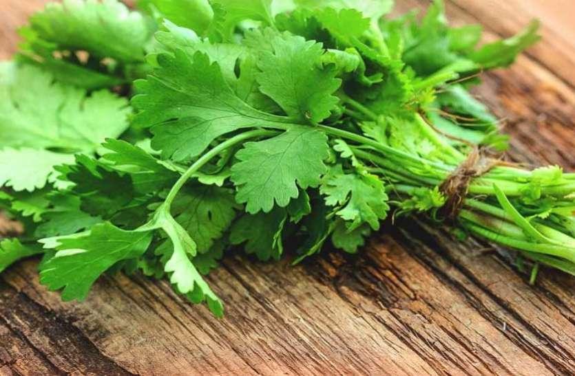 Green Coriander Works In These Diseases - हरा धनिया इन बीमारियों में कारगर    Patrika News