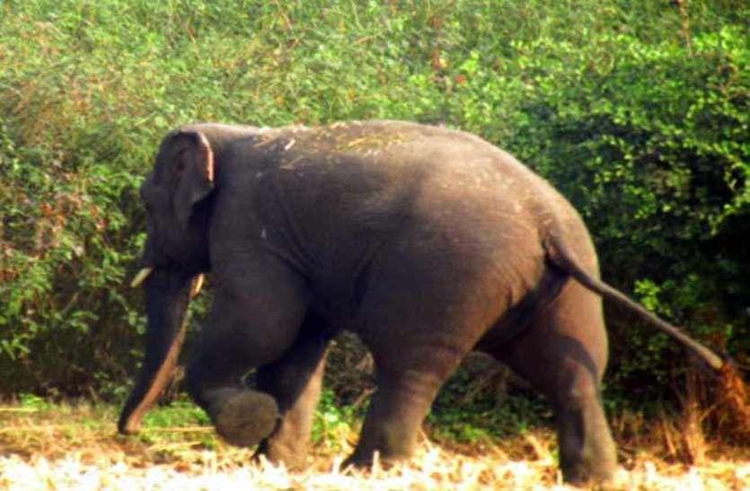 दल से बिछड़कर गांव के नजदीक पहुंचे दो जंगली हाथी, वन विभाग की टीम ने दी चेतावनी