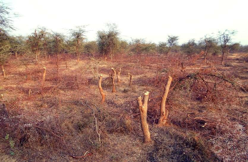 पर्यावरण बचाने के दावे हो रहे खोखले साबित, वन विभाग की क्लोजर से काटे जा रहे हरै पेड़
