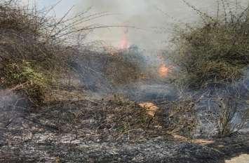 बांस बाड़ी में लगी आग, 25 एकड़ में लगा बांस जलकर हुआ खाक
