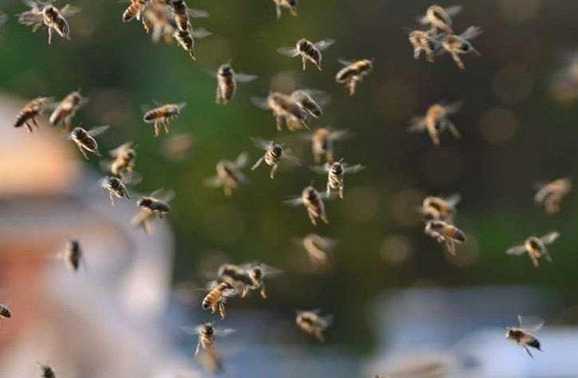 मधुमक्खियों ने अचानक लाइन में खड़े वोटर्स पर किया हमला, मची अफरा-तफरी