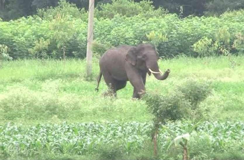 मतदान केंद्रों में वन विभाग कर रहा हाथियों का लोकेशन ट्रेस, पल-पल की ली जा रही जानकारी