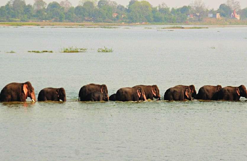 दो झुंड में बंटा हाथियों का दल बढ़ रहा आबादी की ओर, दहशत में ग्रामीण