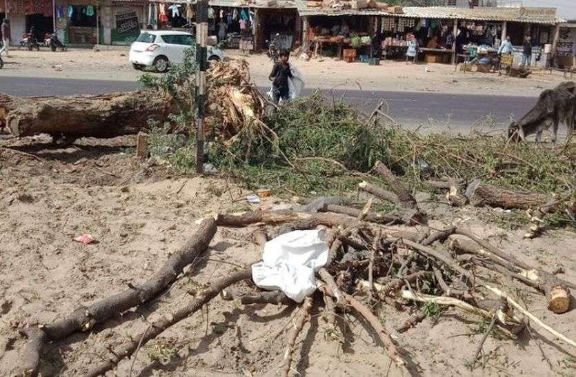 VEDIO : एक के बाद एक काट दिए सैकड़ों हरे पेड़, आखिर क्यों कुछ नहीं बोला...पढ़ें पूरी खबर