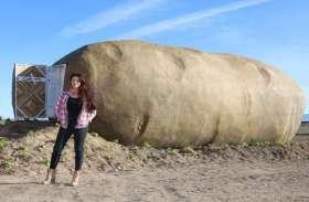 तेजी से बढ़ रही है इस 6 टन के आलू की डिमांड, जानिए क्या है इसकी खासियत