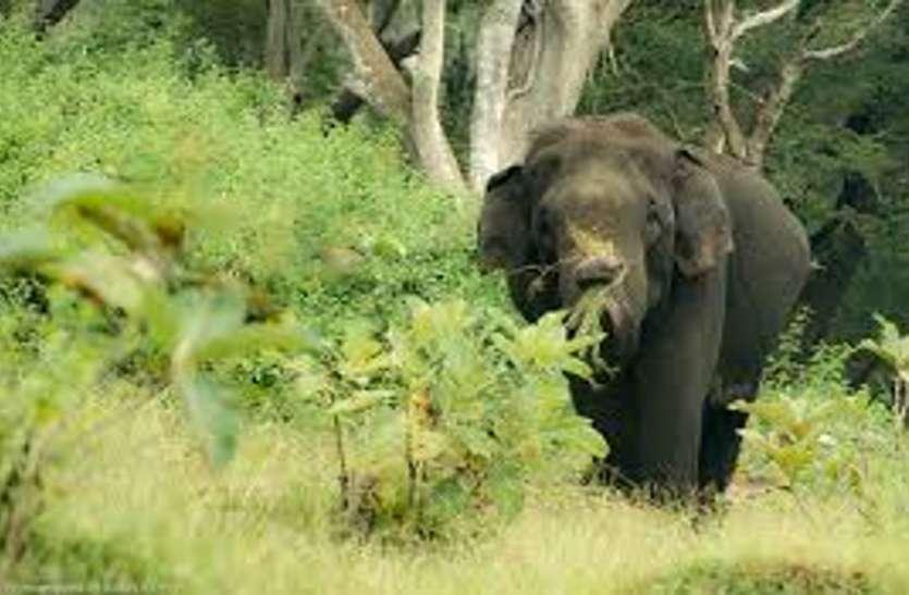 विभाग के लाख कोशिशों के बाद भी थम नहीं रहा हाथियों आतंक