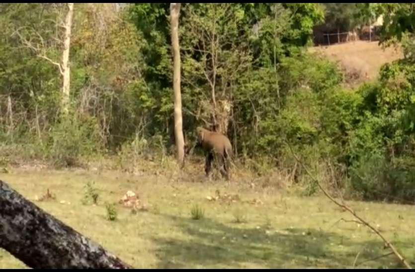 गांव के नजदीक पहुंचे दो जंगली हाथी, वन विभाग की चेतावनी के बाद ग्रामीणों में दहशत