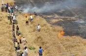 Video: बिजली विभाग की लापरवाही से जल गई 90 बीघा गेहूं की फसल