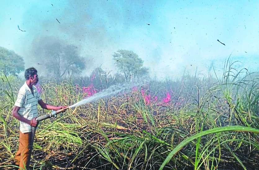 अधिक गन्ना उत्पादन किसानों के लिए बना मुसीबत, अब खुद ही लगा रहे फसलों में आग