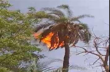 उफ... इतनी गर्मी, यहां खड़े पेड़ में लग गई आग