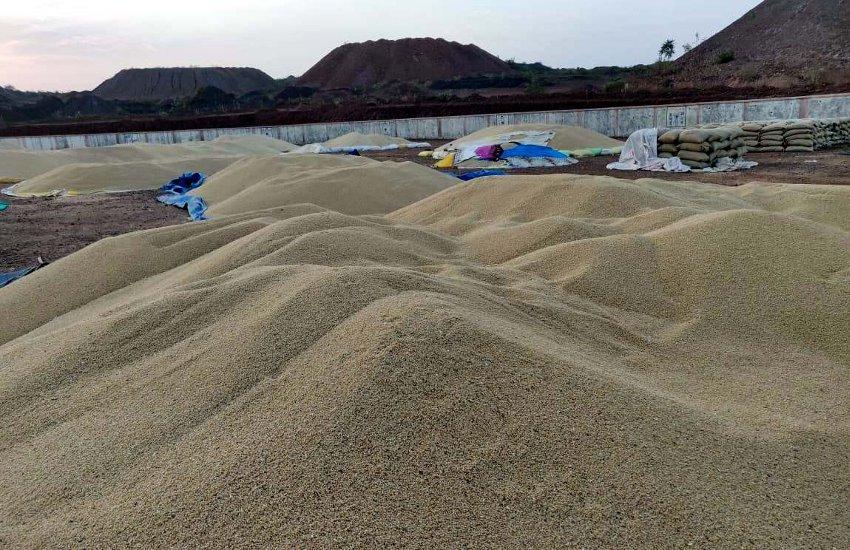 तेज धूप में 25 हजार क्विंटल अनाज की तकवारी कर रहे किसान