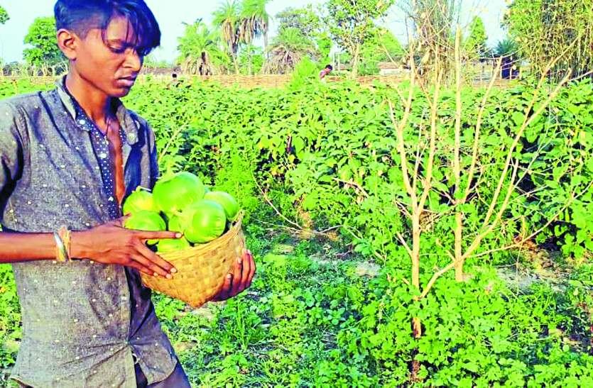 बिना किसी प्रशिक्षण और सरकारी मदद के नक्सल प्रभावित गांवों में लोग उगा रहे जैविक सब्जियां