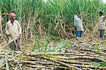 शक्कर कारखाने में खरीदी नहीं तो आधे दाम पर गुड़ फैक्ट्रियों को गन्ना बेच रहे किसान