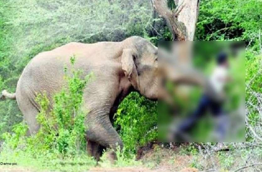 रात में फसल की रखवाली करने खेत में सोया था किसान, दंतैल हाथी ने पैरों तले रौंदा