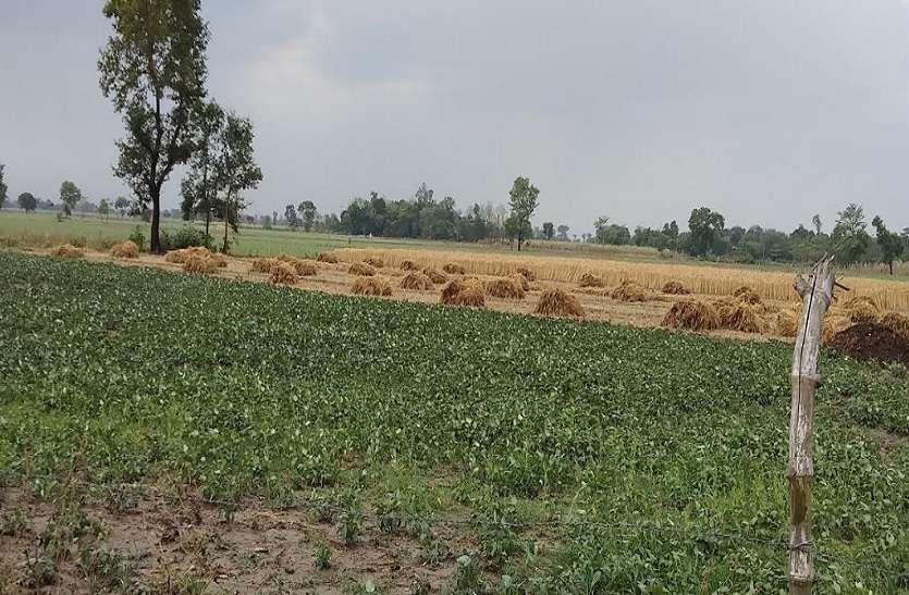 फैनी तूफान ने यूपी के इस जिले में मचाई तबाही, किसानों की लाखों की फसल हुई बर्वाद, विभाग ने फिर जारी किया एलर्ट