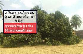 मलिहाबाद के दशहरी आमों को टक्कर दे रहा है MP का ये पेड़, 80 साल पहले लाया गया था राजधानी से...
