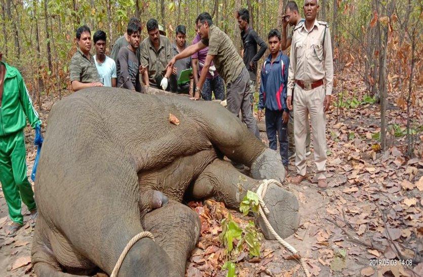 वन विभाग ने कर दिए करोड़ो रूपये खर्च लेकिन इस कारण काबू में नहीं आ रहे हाथी