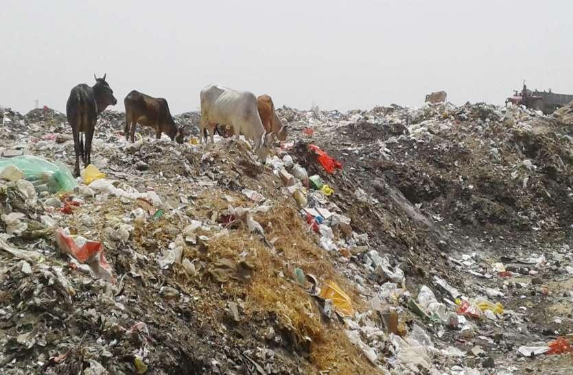 पॉलीथिन : धरती पर बढ़ा रहा प्रदूषण, मानव व पशुधन के स्वास्थ्य पर भी संकट