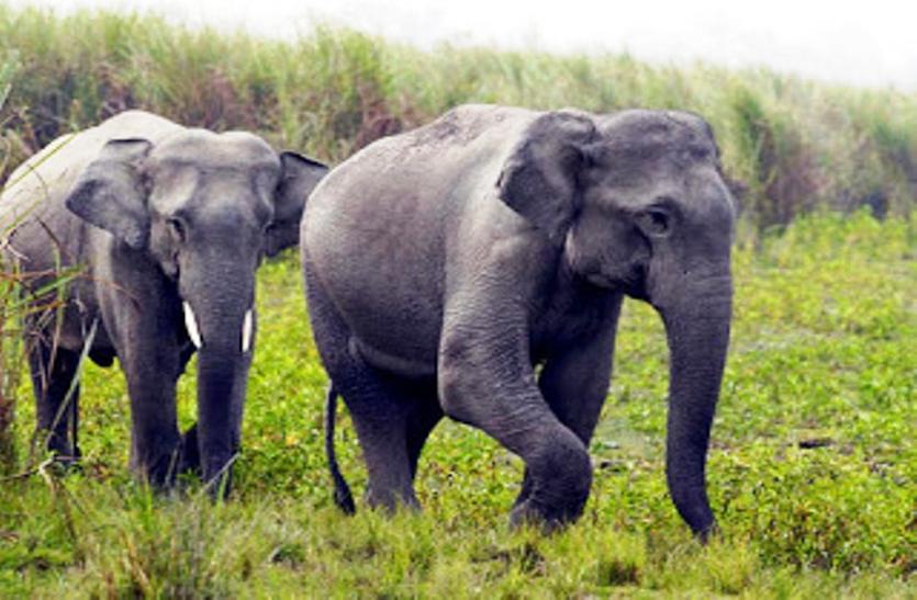 तेंदूपत्ता संग्रहण करने गए ग्रामीण पर हाथियों ने कर दिया हमला, दशहत में लोग