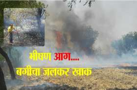 नौलाइयों की आग ने बगीचा किया खाक, साढ़े चार सौ पेड़ जले