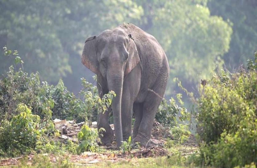फसल को नुकसान पहुंचाने के बाद हाथियों ने तोड़ा मोटर पंप, दहशत में ग्रामीण