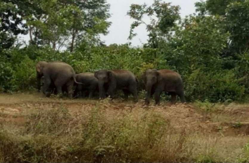 सिरपुर के चुहरी गावं में जब आ धमका जंगली हाथियों का दल, तो लोगों ने इस तरह बचाई अपनी जान
