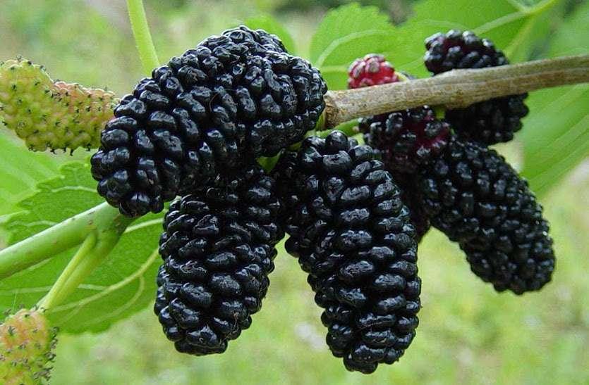 छोटे से दिखने वाले इस फल में हैं ढ़ेरों औषधीय गुण, जानें इसके 10 बड़े फायदे