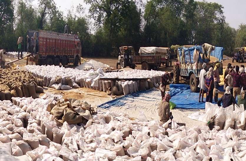 पिछले साल से आठ फीसदी ज्यादा हो गई जिले में गेहूं की खरीद