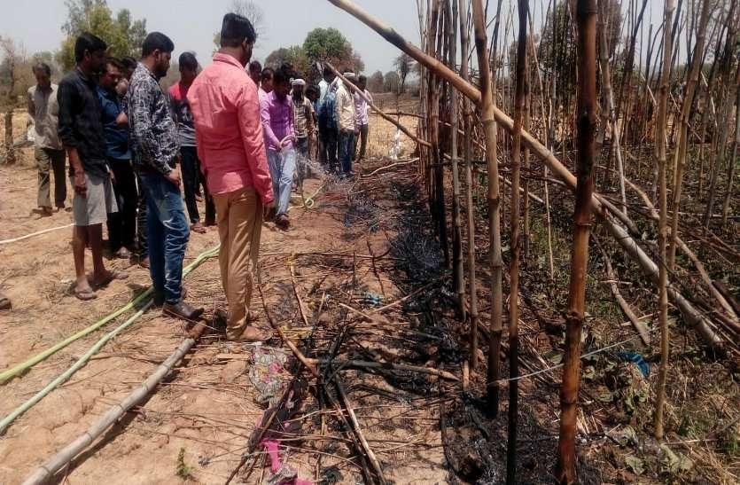 आग लगने से पान बरेजा हुए राख, दो किसान भी झुलसे, देखें वीडियो