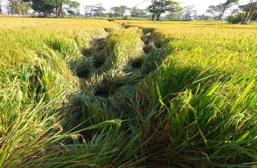 गर्मी में इस तरह करें खेती तो होगा फायदा, मौसम आधारित कृषि सलाह दे रहे वैज्ञानिक