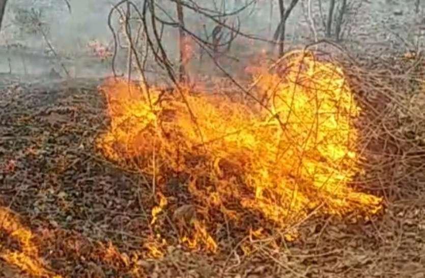 प्रबंधन की असफलता से जल रहे घर-जंगल, जानिए कैसे करें सुरक्षा