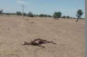 जमीन पर पड़े हाइटेंशन लाइन की चपेट मेें आने से चार भेड़-बकरियों की मौत